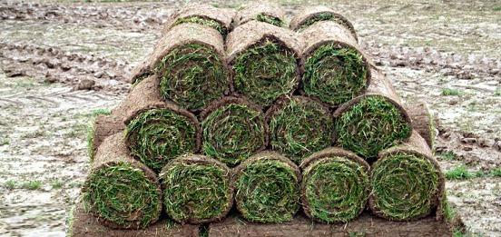 Abbey Turf fresh Products