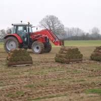 local turfing