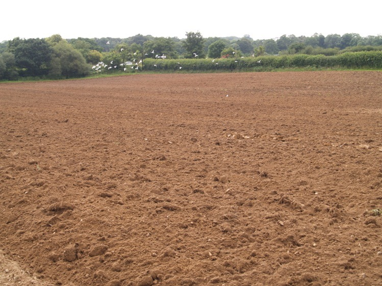 local sourced top soil